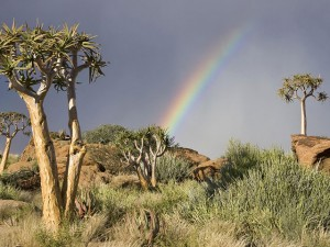 4x4 Rental - Namib Desert Namibia