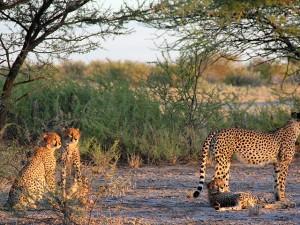 4x4 Rental South Africa - Wildlife