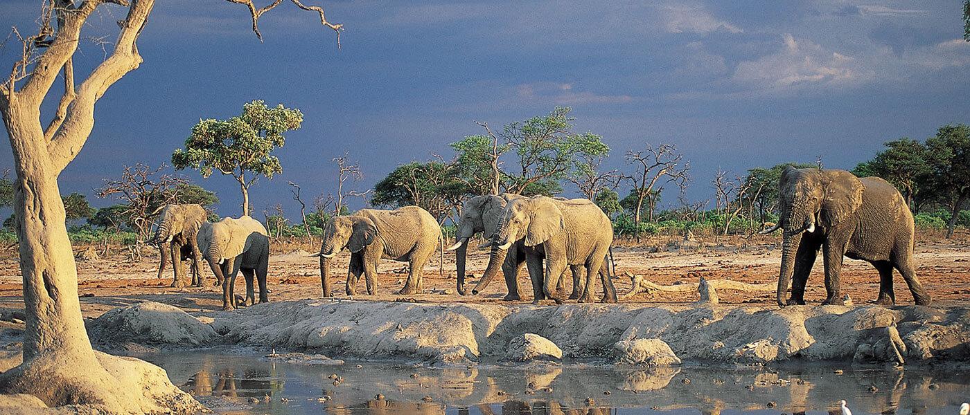 Elephants - Upington 4x4 Rentals